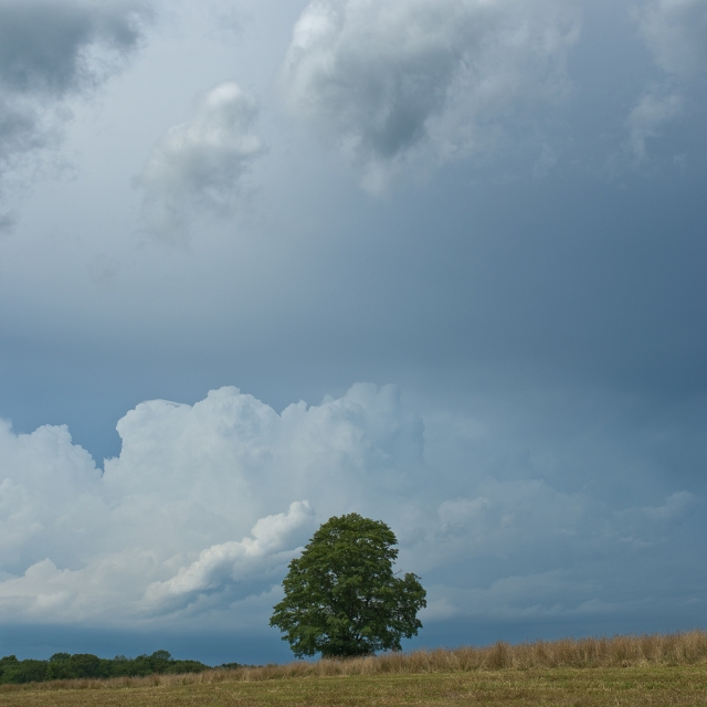 Gathering-Storm,-Roxbury