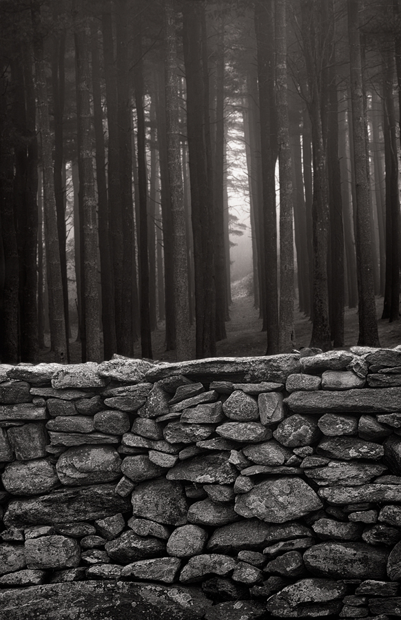 Stone-fence-and-trees