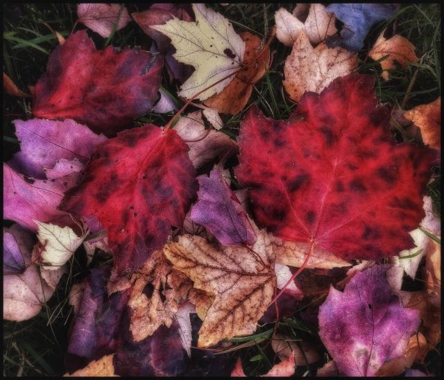 Fall medley, Woodbury, Connecticut © Steven Willard