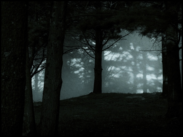 Moonlight through the pines, Woodbury, Connecticut © Steven WEillard