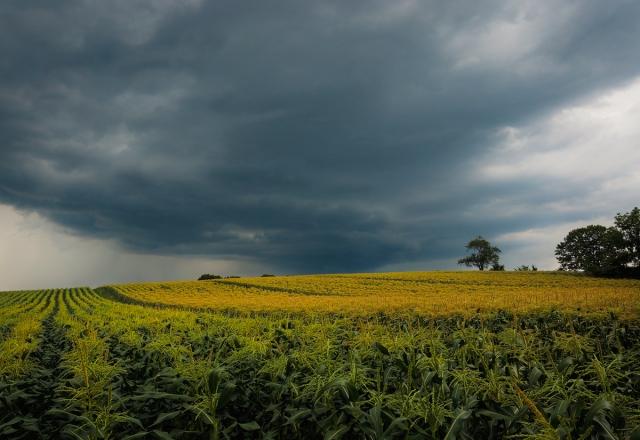 Corn warning, Woodbury, Connecticut © Steven Willard