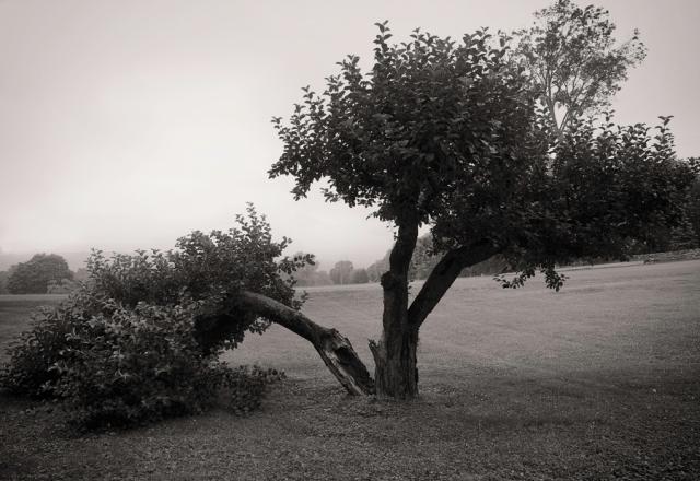 Ochard