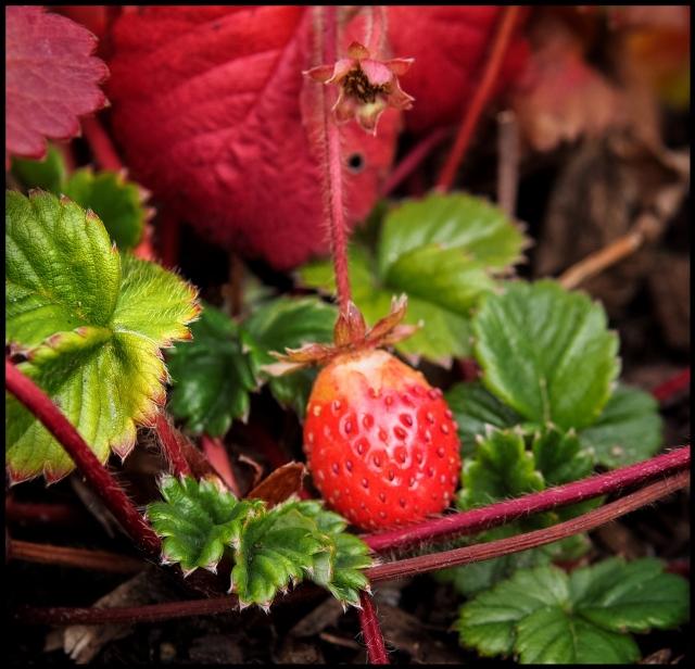 Fresh Fruit, Woodbury, Connecticut © Steven Willard