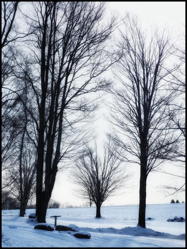 Winter Bones, Washington, Connecticut © Steven Willard