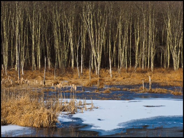 Wetlands Winter, Roxbury, Connecticut © Steven Willard