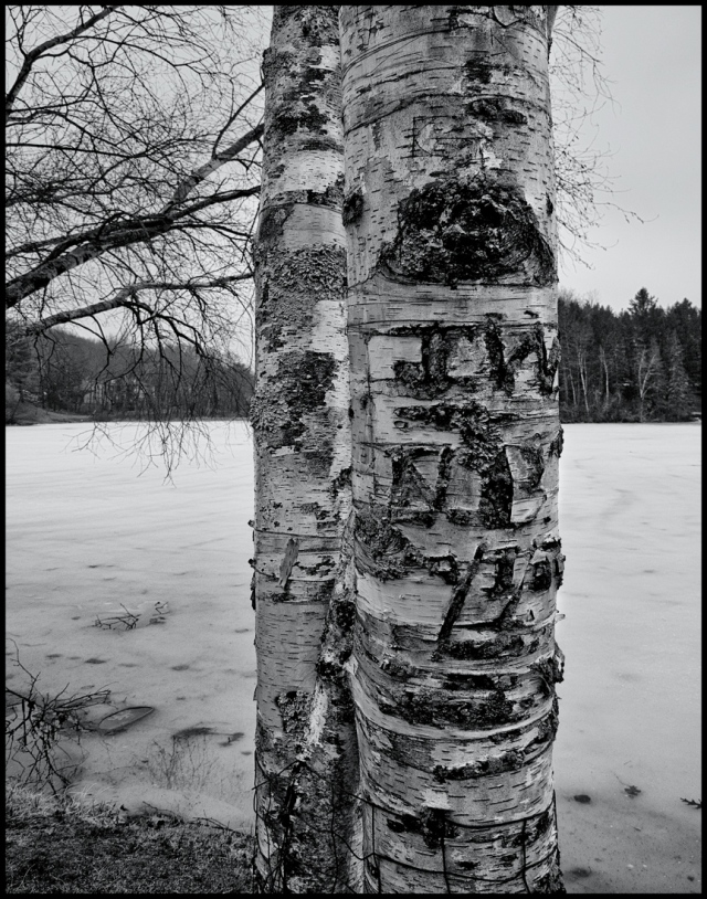 Winter Wounds, Woodbury, Connecticut © Steven Willard