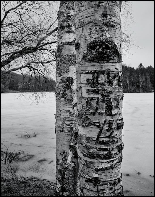 Winter Wounds, Woodbury, Connecticut © Steven Willard
